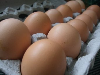 Farm Fresh Eggs from the barnyard hens