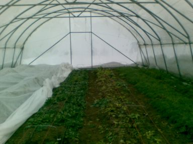The Winter Garden - Inside the Cool Frame Hoop House